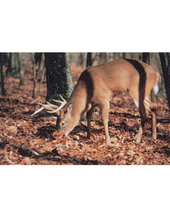 102 whitetail deer