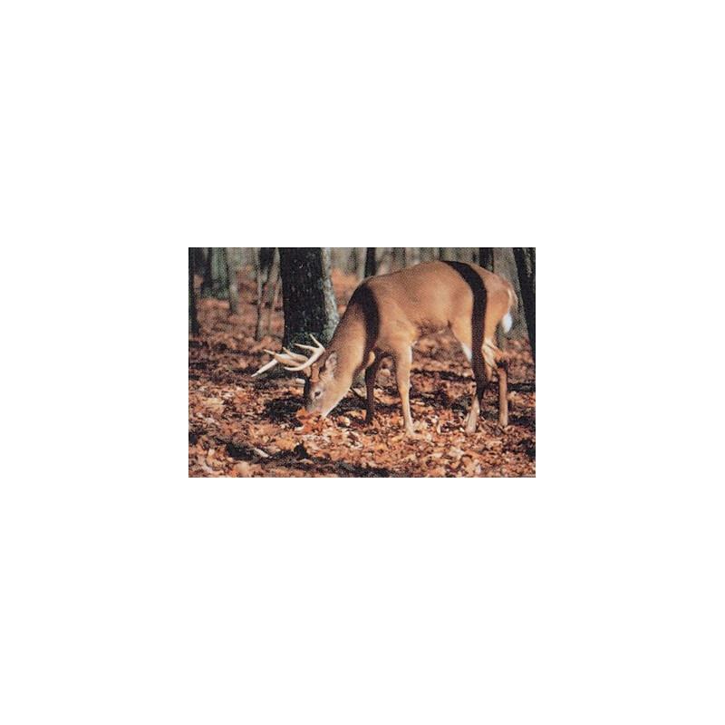 102 whitetail deer