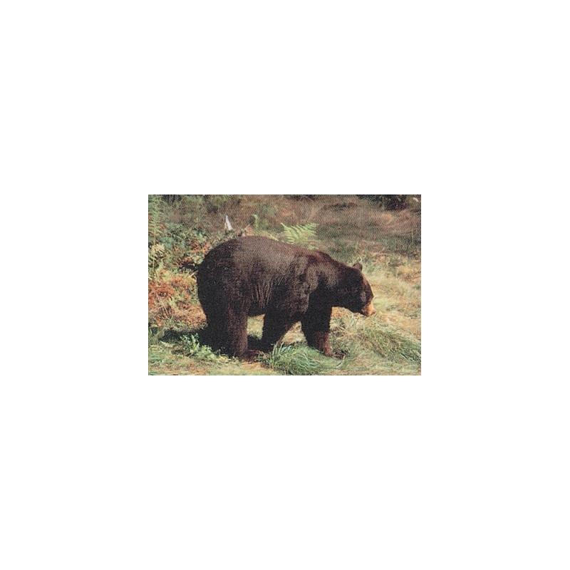 104 bear