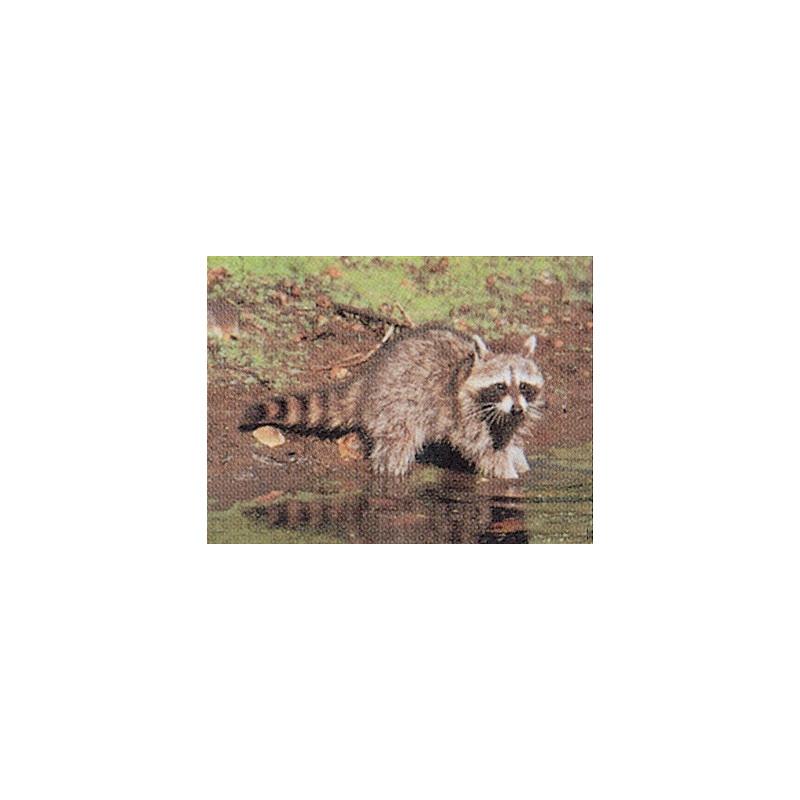 106 racoon