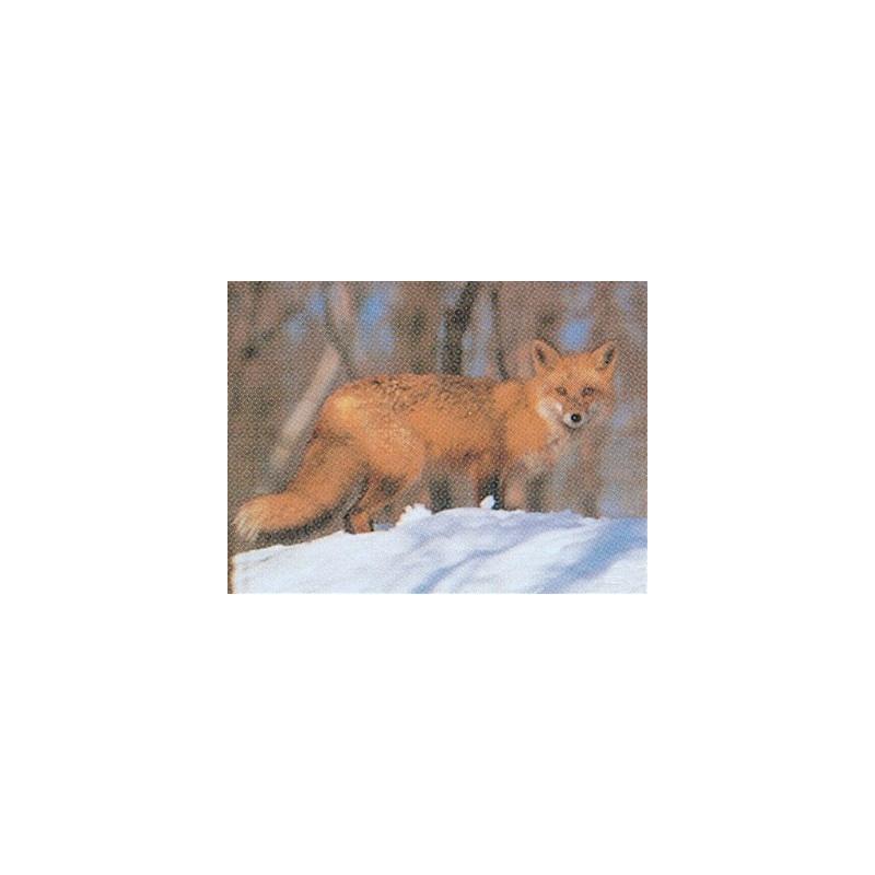 107 fox