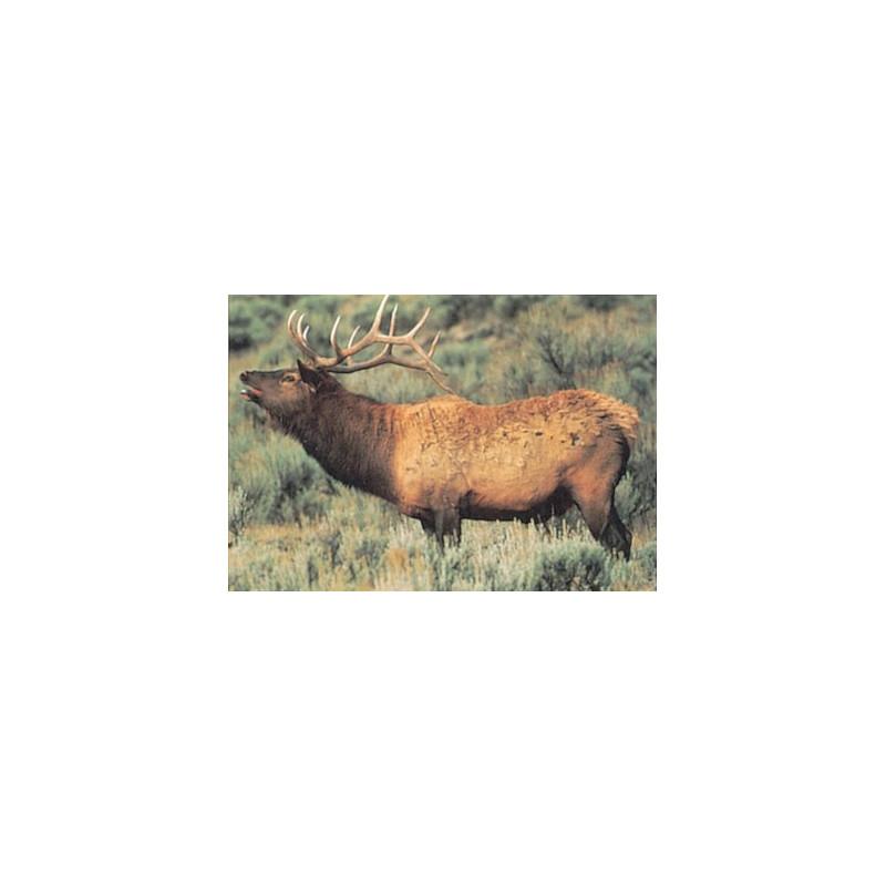 110 elk