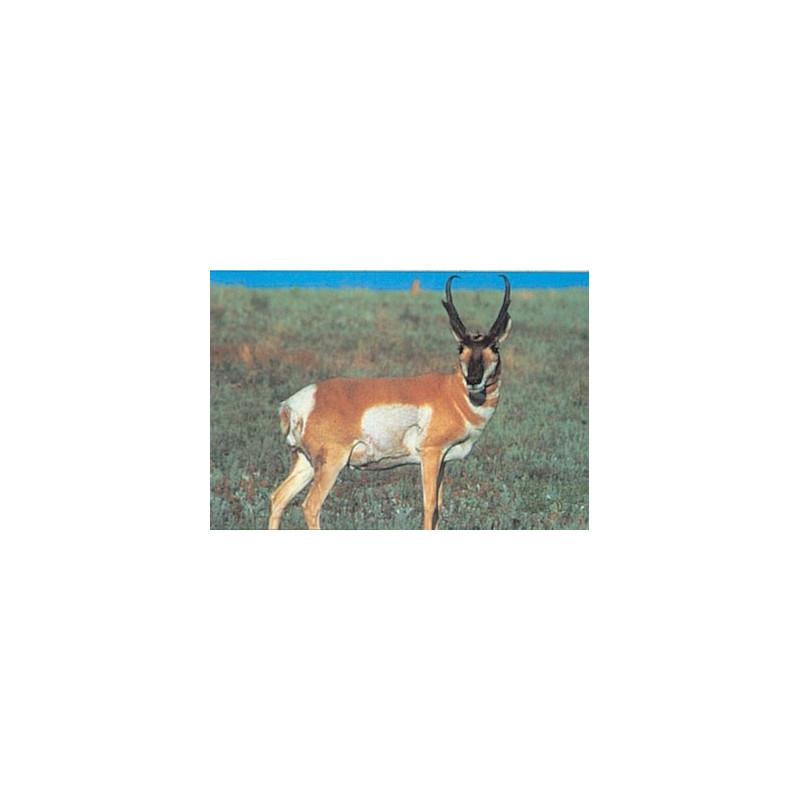 114 antelope