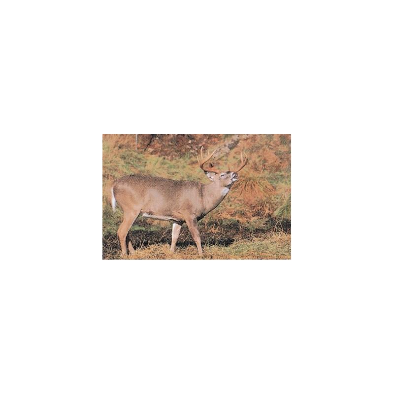 203 whitetail deer