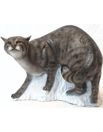 chat sauvage en marche